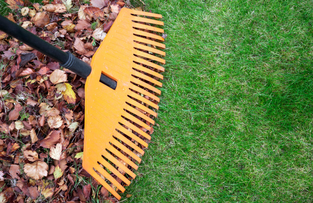 fall-lawn-care-tips