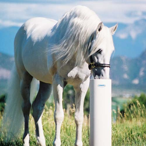 Drinking-Post-Automatic-Horse-Waterer
