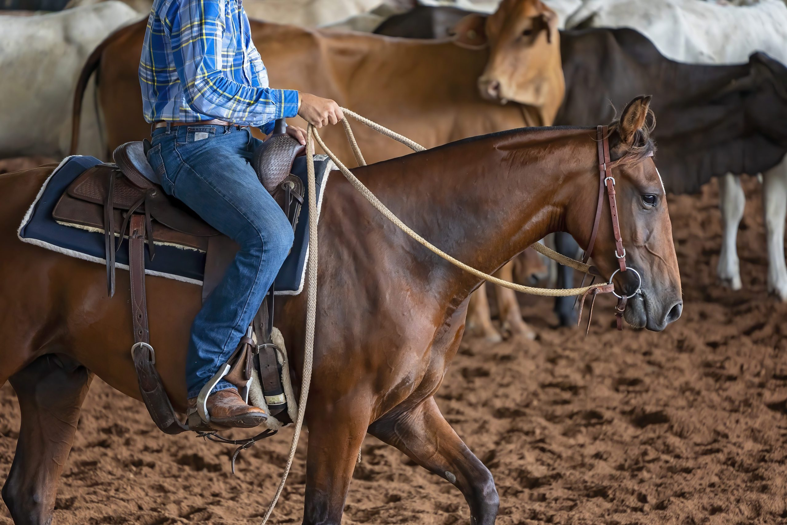 A horse and rider in a western style equestrian cutting competition