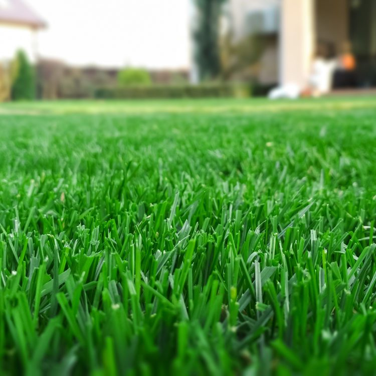lawn-care-wooster